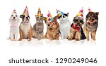 lovely birthday pets wearing... | Shutterstock . vector #1290249046