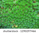 fractal image from nature | Shutterstock . vector #1290297466