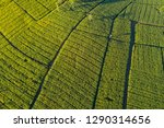 aerial view of green corn field.... | Shutterstock . vector #1290314656