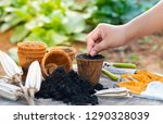 hand seedling seed to coconut... | Shutterstock . vector #1290328039