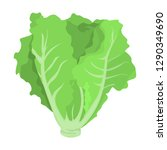 green lettuce. fresh healthy... | Shutterstock .eps vector #1290349690