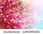 sakura bush in soft light.... | Shutterstock . vector #1290390250