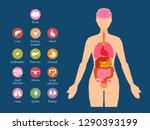 major human body internal...   Shutterstock .eps vector #1290393199