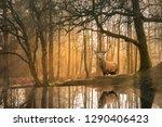 Stunning Landscape Image Of...