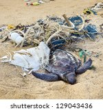 dead turtle entangled in...   Shutterstock . vector #129043436
