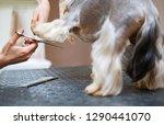 pet groomer cuts yorkshire... | Shutterstock . vector #1290441070