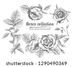 set of hand drawn sketch roses  ... | Shutterstock .eps vector #1290490369