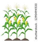 corn stalks isolated on white... | Shutterstock .eps vector #1290494533
