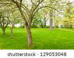 Old blossom trees in spring park at evening - stock photo