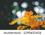 yellow starburst flowers ...   Shutterstock . vector #1290652426