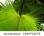 tropical palm leaf in the... | Shutterstock . vector #1290723679