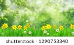 spring flowers and green grass... | Shutterstock . vector #1290753340