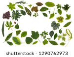 flat layer of leaves of various ...   Shutterstock . vector #1290762973