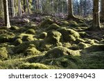 green mossy forest ground in a... | Shutterstock . vector #1290894043