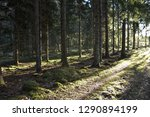 dirt road in a bright sunlit... | Shutterstock . vector #1290894199