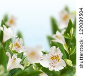 Beautiful white flowers with bokeh. Floral background. - stock photo