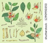 collection of ashwagandha ... | Shutterstock .eps vector #1290950353