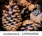 restaurant food from minas... | Shutterstock . vector #1290964906