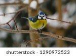 blue tit winter estonian... | Shutterstock . vector #1290972523