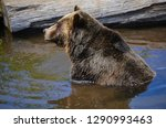 the grizzly bear also known as... | Shutterstock . vector #1290993463