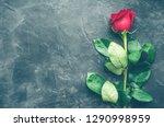 Red Rose Flower On Dark Grey...
