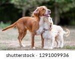 a springer spaniel standing...   Shutterstock . vector #1291009936