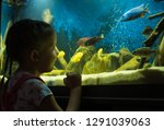 little girl child looks at the... | Shutterstock . vector #1291039063