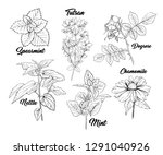 tea herbs botany plants... | Shutterstock .eps vector #1291040926