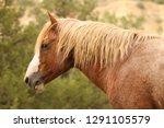 wild horse of theodore...   Shutterstock . vector #1291105579