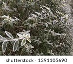 november calendar image with...   Shutterstock . vector #1291105690