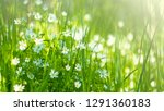 meadow with meadow grasses and...   Shutterstock . vector #1291360183