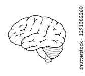 anatomy of human brain in... | Shutterstock .eps vector #1291382260