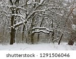 majestic oak trees in winter... | Shutterstock . vector #1291506046