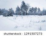 winter meadow under snow in... | Shutterstock . vector #1291507273