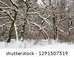 winter landscape in deep forest | Shutterstock . vector #1291507519