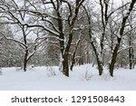 winter landscape with oak trees ... | Shutterstock . vector #1291508443