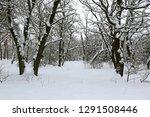 oak trees in winter forest | Shutterstock . vector #1291508446