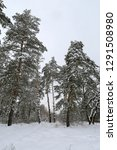 winter landscape with pines in... | Shutterstock . vector #1291508980