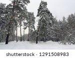 scene with pine trees in winter ... | Shutterstock . vector #1291508983
