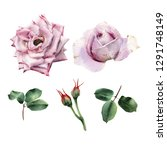 roses and leaves  watercolor ... | Shutterstock . vector #1291748149