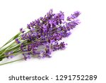 bouquet of lavender  on a white ...   Shutterstock . vector #1291752289