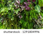 Texture Of Living Wall With...