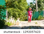 Little Girl And Geese. Image...