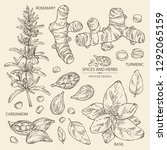 collection of herbs and spices  ...   Shutterstock .eps vector #1292065159