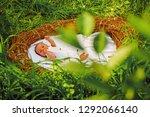 infant hygiene. small baby boy... | Shutterstock . vector #1292066140