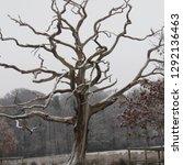 snow tree near keswick cumbria... | Shutterstock . vector #1292136463