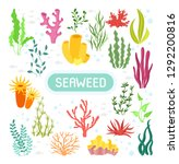Seaweeds. Vector Illustration...
