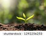 plant growing in morning light. ... | Shutterstock . vector #1292256253