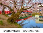 full bloom sakura   cherry... | Shutterstock . vector #1292280733