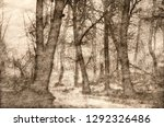 sketch of a misty forest on a... | Shutterstock . vector #1292326486